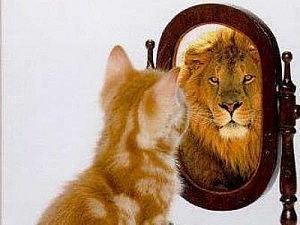 kitten-lion-mirror